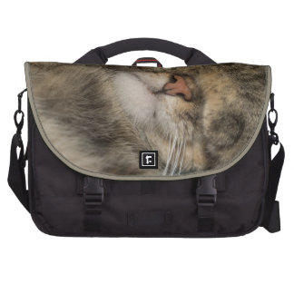 Ojos de la cubierta del gato de casa mientras que  bolsas para ordenador