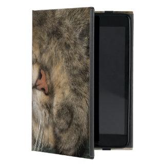 Ojos de la cubierta del gato de casa mientras que  iPad mini cobertura