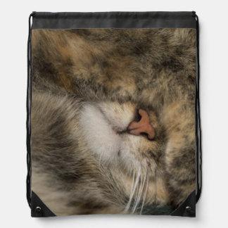 Ojos de la cubierta del gato de casa mientras que  mochilas