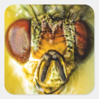 Ojos de la mosca - encima de cercano y de personal calcomanía cuadrada personalizada