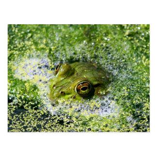 Ojos de la rana postal