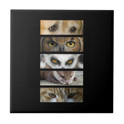 Ojos de los animales azulejos ceramicos