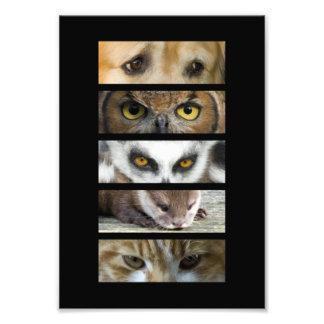 Ojos de los animales fotografia