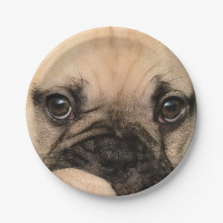 Ojos de un perrito lindo del dogo francés platos de papel