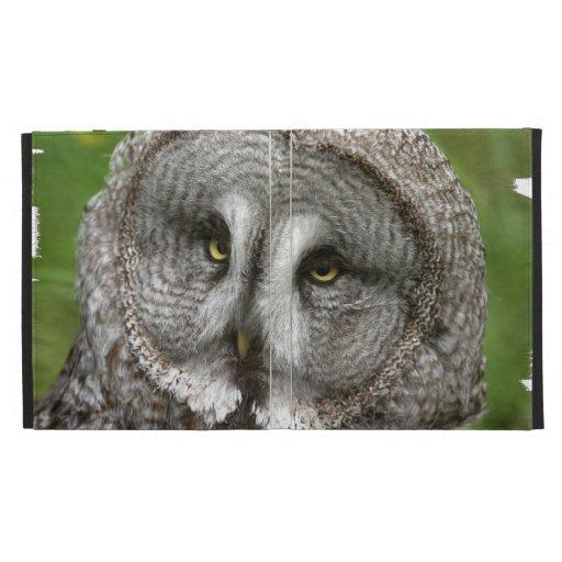 Ojos del búho