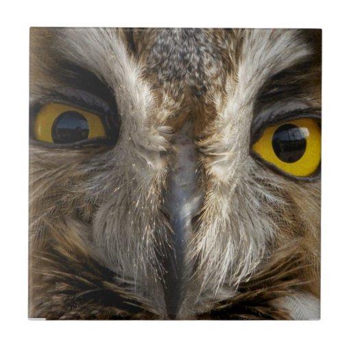 Ojos del búho azulejo cuadrado pequeño