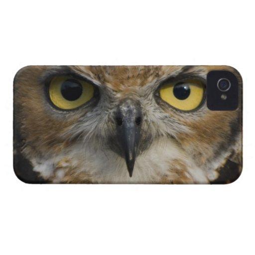 Ojos del búho Case-Mate iPhone 4 fundas