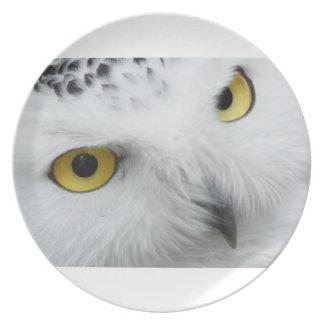 Ojos del búho de la nieve platos de comidas