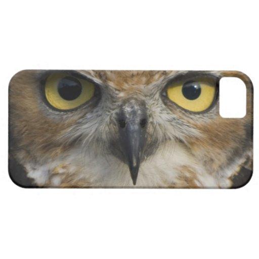 Ojos del búho iPhone 5 carcasas