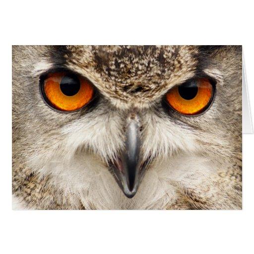 Ojos del búho, ojos de la fotografía del búho de E Tarjeta
