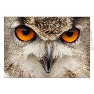 Ojos del búho, ojos de la fotografía del búho de tarjeta de felicitación