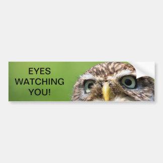 Ojos del búho que miran a la pegatina para el para pegatina de parachoque