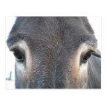 Ojos del burro tarjetas postales