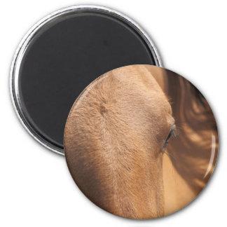 Ojos del caballo imán para frigorifico
