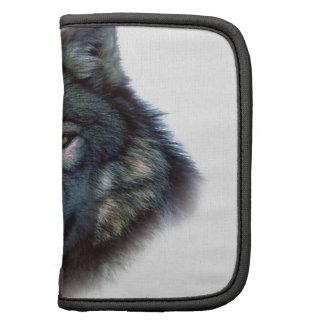 Ojos del lobo gris organizador