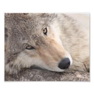 Ojos del lobo - lobo de madera fotografía