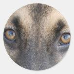 Ojos del pastor alemán etiquetas redondas
