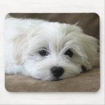 Ojos del perrito tapete de ratones