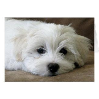 Ojos del perrito tarjeta de felicitación