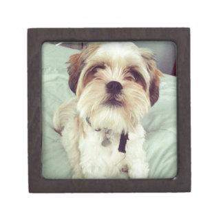 Ojos del perro de perrito caja de joyas de calidad
