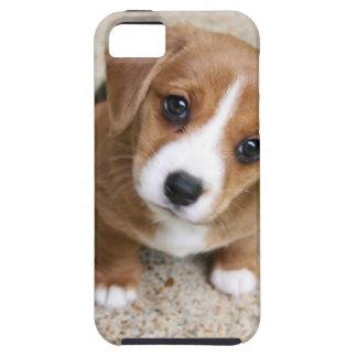Ojos del perro de perrito iPhone 5 fundas