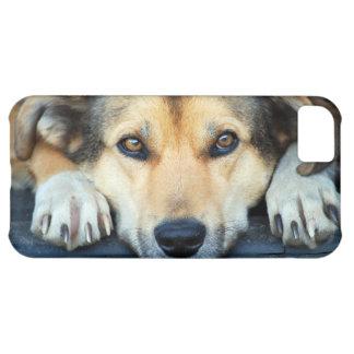 Ojos del perro funda para iPhone 5C