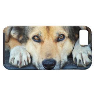 Ojos del perro iPhone 5 carcasa