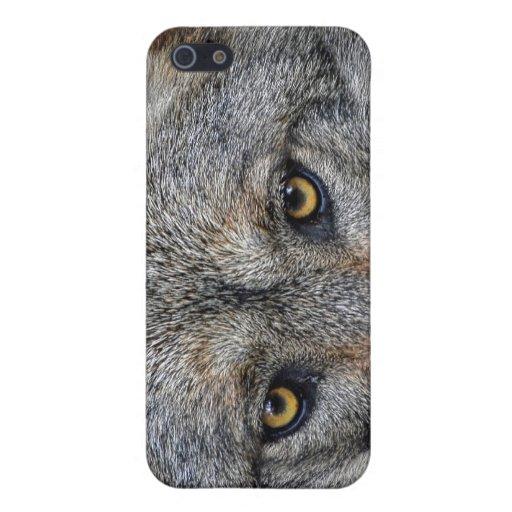 Ojos del primer del lobo iPhone 5 coberturas