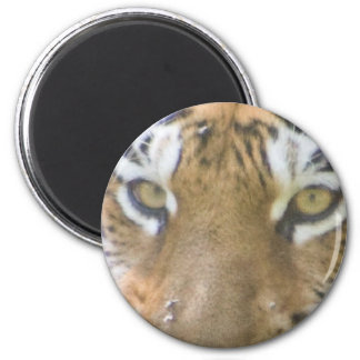 ojos del tigre imán redondo 5 cm