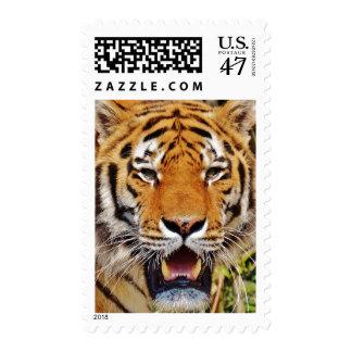 Ojos del tigre timbres postales