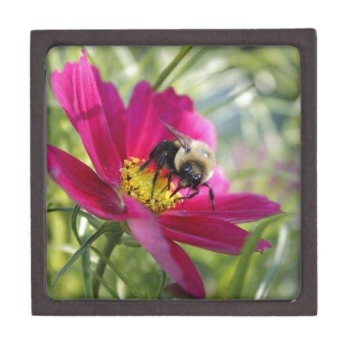 Ojos grandes de la abeja caja de regalo de calidad