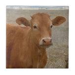 Ojos grandes de la vaca - ganado rojo azulejo cuadrado pequeño