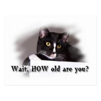 Ojos grandes del amarillo del gato blanco y negro tarjeta postal