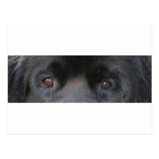 ojos morados de Terranova Postal