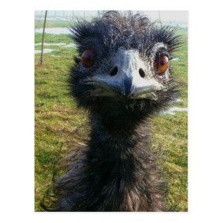 Ojos parecidos a un abalorio EMU Postales