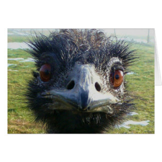 Ojos parecidos a un abalorio EMU Tarjeta De Felicitación