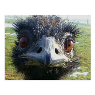 Ojos parecidos a un abalorio EMU Tarjeta Postal