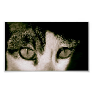 Ojos Póster