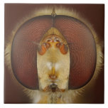 Ojos principales y compuestos de una mosca de la l tejas  cerámicas