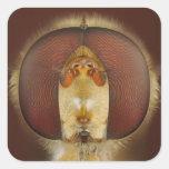 Ojos principales y compuestos de una mosca de la pegatina cuadrada