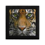 Ojos salvajes del tigre cajas de regalo