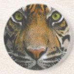 Ojos salvajes del tigre posavasos personalizados