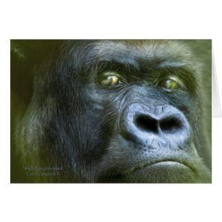 Ojos salvajes - Silverback ArtCard Tarjeta