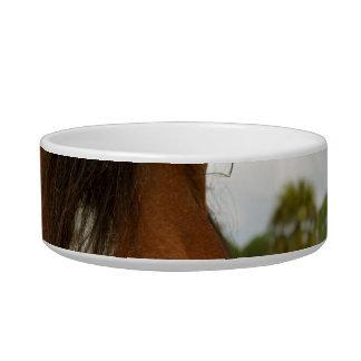 ojos sobre la cabeza de caballo de la cerca tazón para gato