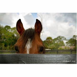 ojos sobre la cabeza de caballo de la cerca esculturas fotograficas