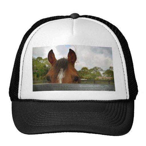 ojos sobre la cabeza de caballo de la cerca gorra