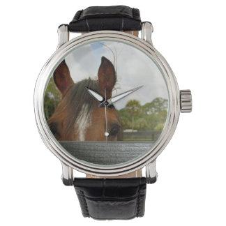 ojos sobre la cabeza de caballo de la cerca reloj