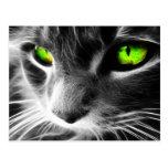 Ojos verdes del gato gris tarjetas postales