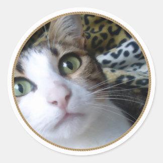 Ojos verdes del gato - pegatina redondo