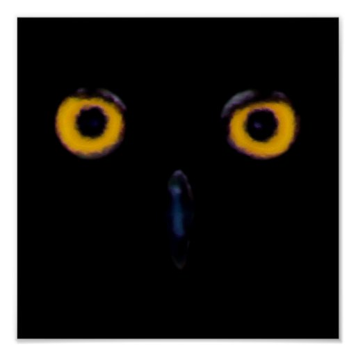 Ojos viejos sabios del búho póster